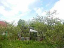 Что делать с запущенным садовым участком