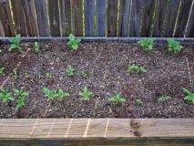 Что такое школка для растений и как ее сделать