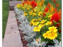 Цветник рабатка – красота сада