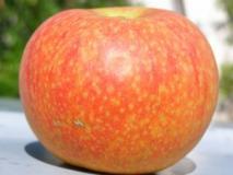 Гиббереллины для увеличения урожая – гибберелловая кислота