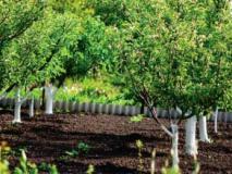 Главные моменты при закладке плодового сада