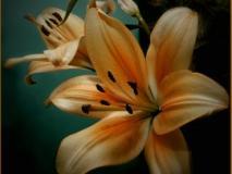 Изготовление композиций из цветов лилии в саду