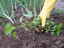 Как по сорнякам определить почву для посадки растений