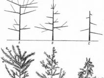 Как поддержать физиологическое равновесие деревьев
