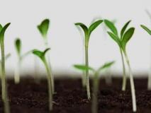 Как проверить семена на всхожесть в домашних условиях