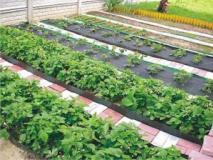 Как сделать грядки на даче, подготовка своими руками почвы под посадку
