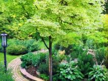 Как создать цветник с пестролистными растениями