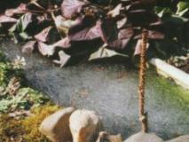 Как ухаживать за прудом на даче из старой ванны