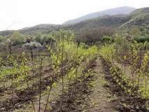 Как выбрать и  когда сажать саженцы плодовых деревьев