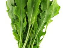 Как вырастить салат рукола