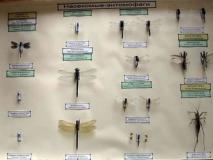 Какие известные энтомофаги используют в борьбе с вредителями сада