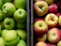 Какие условия необходимы для хранения яблок