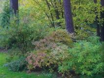 Какой создать цветник под деревьями