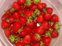 Когда и как собирать ягоды земляники