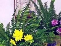 Композиции из цветов и растений в интерьере кухни мастер-класс