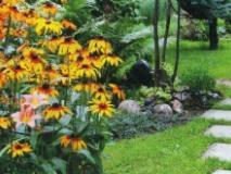 Композиции из цветов рудбекии в саду