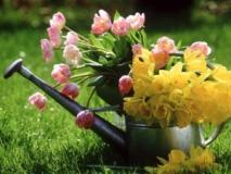 Летний полив растений. Полив сада