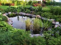 Маленькие секреты ухода за естественным прудом