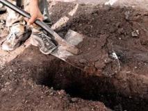 Подготовка и посадка растений для живой изгороди