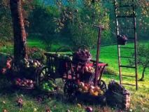 Популярные подвои для яблони
