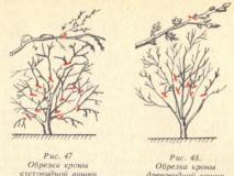 Правила обрезки вишни и сливы