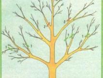 Прореживание деревьев