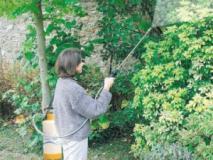 Прореживание плодов на деревьях путем опрыскивания динитросоединениями