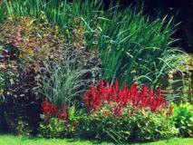 Растительное оформление пруда