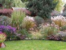 Разнообразие декоративных трав в саду