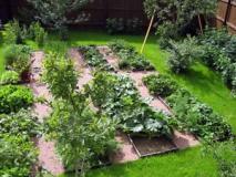 Севооборот на огороде, таблицы чередования овощных культур