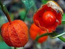 Советы по выращиванию экзотических садовых растений в средней полосе