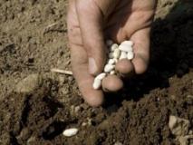 Способы посева семян в открытый грунт