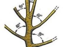 Тонкости весенней обрезки деревьев и кустарников