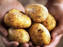 Уход за картофелем, какие работы нужно не забыть