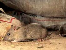 Ультразвуковой отпугиватель поможет избавиться от мышей навсегда