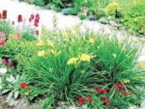 Условия и принципы создания красивого цветника, фото