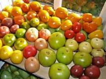 Условия сбора и хранения томатов. Секреты и уловки дачников