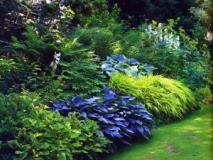 Варианты цветников в тени