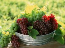 Виды органических удобрений для винограда