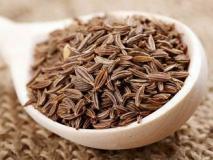 Выращивание тмина для новичков, уход и сбор семян