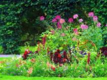 Яркие комбинации цветников из однолетников, схемы посадок