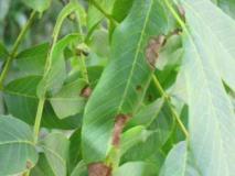 Защита растений от вредителей и болезней.