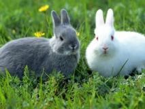 Зачем разводить кроликов?