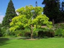 Советы по выращиванию деревьев