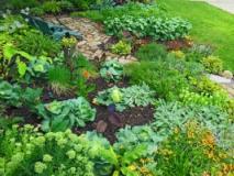 Как спасти огород от засухи и мороза
