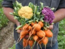Огородные заботы августа