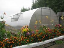Теплицы из поликарбоната – эффективное укрытие для растений
