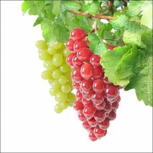 Биопрепараты для винограда, принципы применения