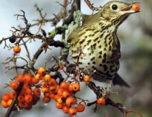 Чем кормить птиц зимой в саду