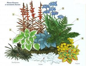 Два варианта создания болотного сада
